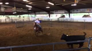 Polly- jared Lesh cowhorses