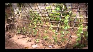 Lead Poisoning in Vietnam