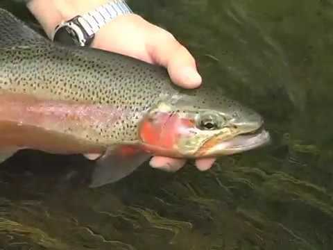 Dry Fly Fishing on Nelsons Spring Creek Ranch  YouTube