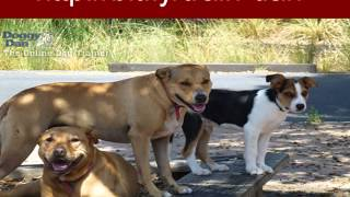 Dog Training, How To Train Dog Basic Obedience, How To Train Dog Obedience