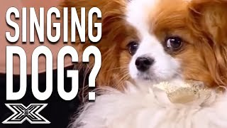 Singing Dog Leaves Simon Cowell Confused! | X Factor Global