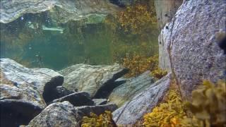 Lofoty, Norsko • Pohled pod hladinu Norského moře s kamerou Magicam S 70