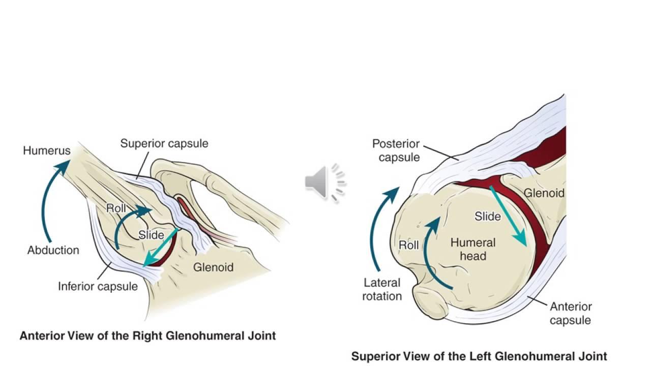 joint capsule diagram [ 1280 x 720 Pixel ]