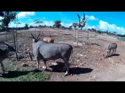 safari- zoo MALLORCA
