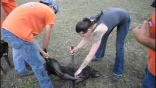 Repeat youtube video my wifes first hog with cold steel knife