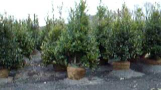Yardley Pa   Tree Farm Delivers and Plants  BBB  AAA XXX
