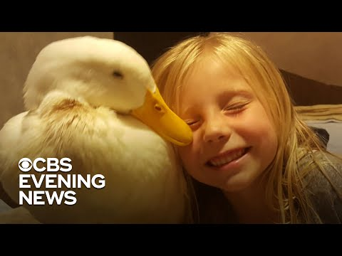 A girl's unbreakable bond with her pet duck grows deeper every day