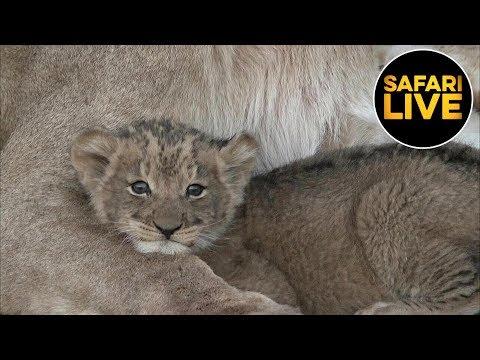 safariLIVE - Sunset Safari - September 17, 2019