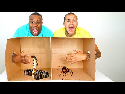 What's In The BOX Challenge! ANIMALS AND GROSS BUGS
