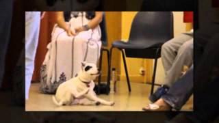 Serendipity Pet Behaviour