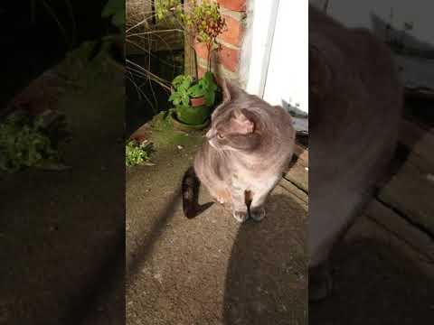 Mowgli the cat and a solar bird - 2018