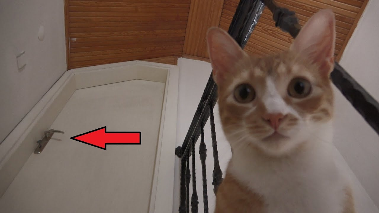 Cat Finds A Mysterious Door In His New House !!