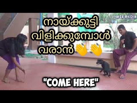 dog training : 'Come here'  Malayalam : kerala : വിളിച്ചാല് വരാന് എന്ത് ചെയ്യണം