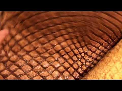 Pirarucu Arapaima Fish   Glazed Collection