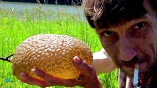 10 Most Bizarre Slimy Creatures
