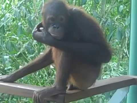 Borneo, Sabah, Sipadan, Mabul, Malaysia