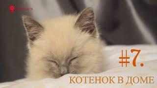 Дай лапу #7. Котенок в доме