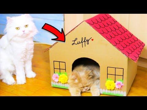 I-AM FĂCUT CĂSUȚĂ LUI LUFFY! DIY Căsuță Pentru Pisici!