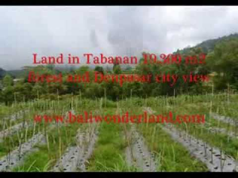 PROPERTY FOR SALE IN BALI, amazing land for sale in Tabanan Bali -- TJTB086