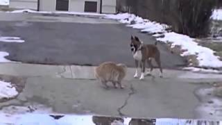 смешные видео про животных  приколы с собаками и кошками