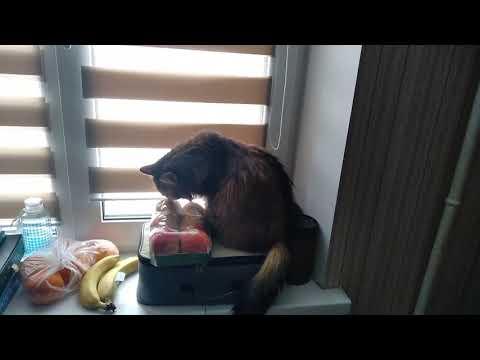 Хочется яблок...или полиэтилена