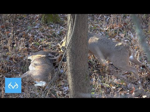 CRAZIEST After Shot Hunt | Josh McDaniel in Indiana | Monster Bucks Mondays