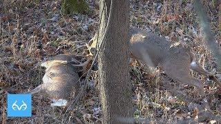 CRAZIEST After Shot Hunt | Josh McDaniel in Indiana | Monster Bucks Mondays Presented by Midway USA