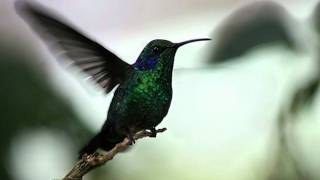 Download El colibrí MP3 song and Music Video