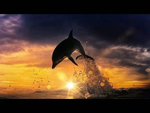 Tribute to the Dolphins of Taiji