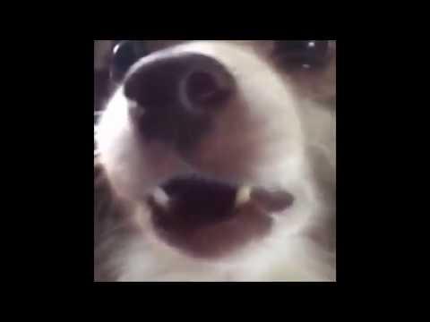 dog saying woof