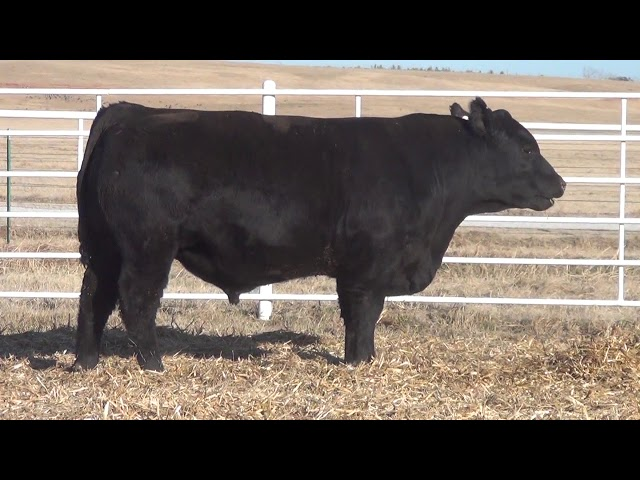 Express Ranches Lot 164