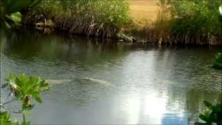 Everglades-fishing