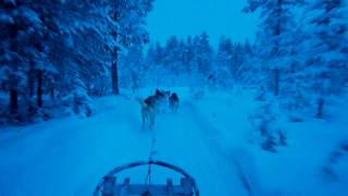 Super Husky Safari - Levi Lapland Dec 2009.