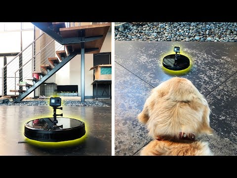 What happens to the Robot Vacuum when we leave? (Dog GoPro Spycam Footage)