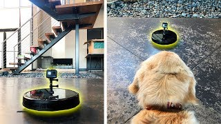 what-happens-to-the-robot-vacuum-when-we-leave-dog-gopro-spycam-footage