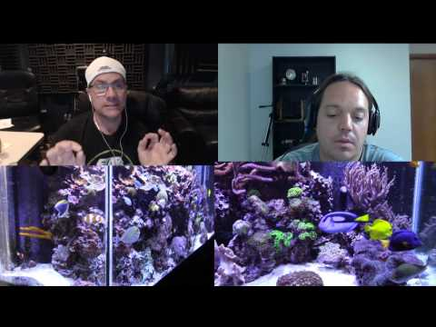 Keeping Clownfish our Experiences (Reef Talk)