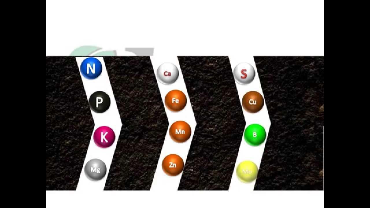 Importancia de los an lisis de suelos fertilab youtube for Importancia de los suelos