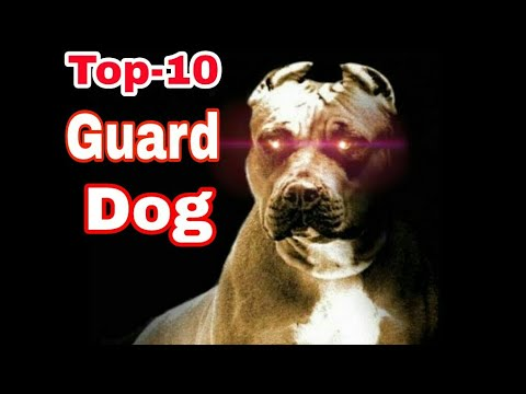 "TOP-10 Guard Dog breed - The Best Watchdogs For Protection/ by ""Aryan Dog Club"" Aryandogclub"