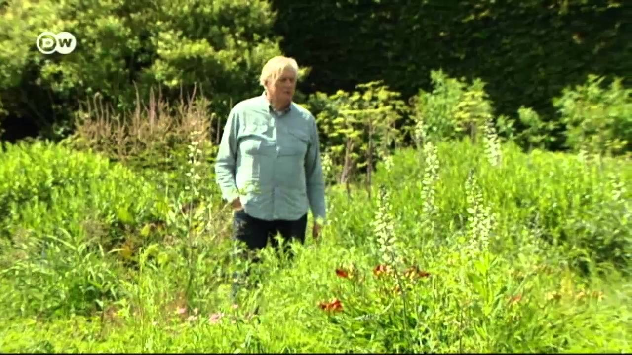 Wilde Gärten | Euromaxx   YouTube