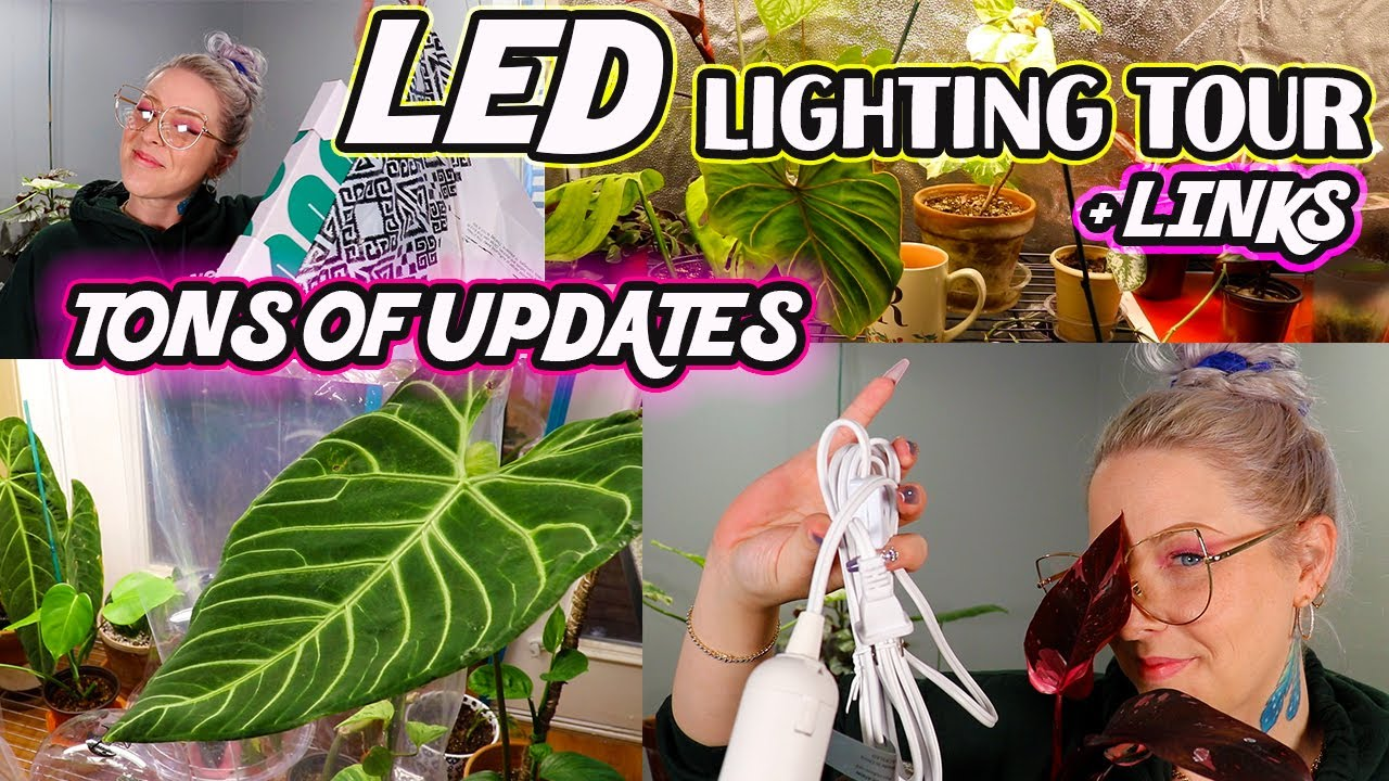 How to Use LED Grow Lights For Your Indoor House Plants During Winter