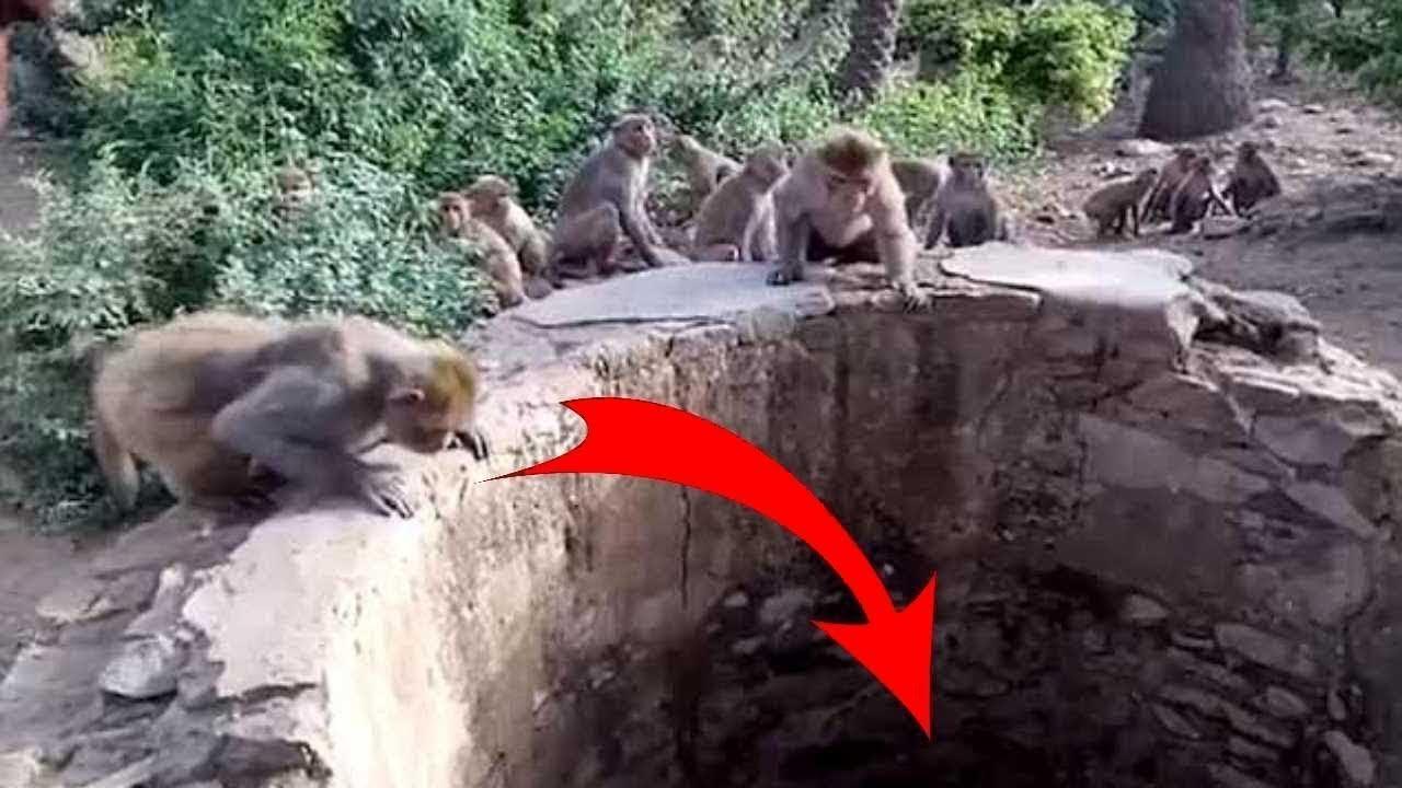 Люди увидели собравшихся вокруг колодца обезьян. То что там оказалось удивило всех!