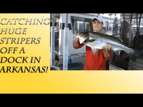 Catching Huge Stripers Off A Dock On Lake Ouachita In Arkansas