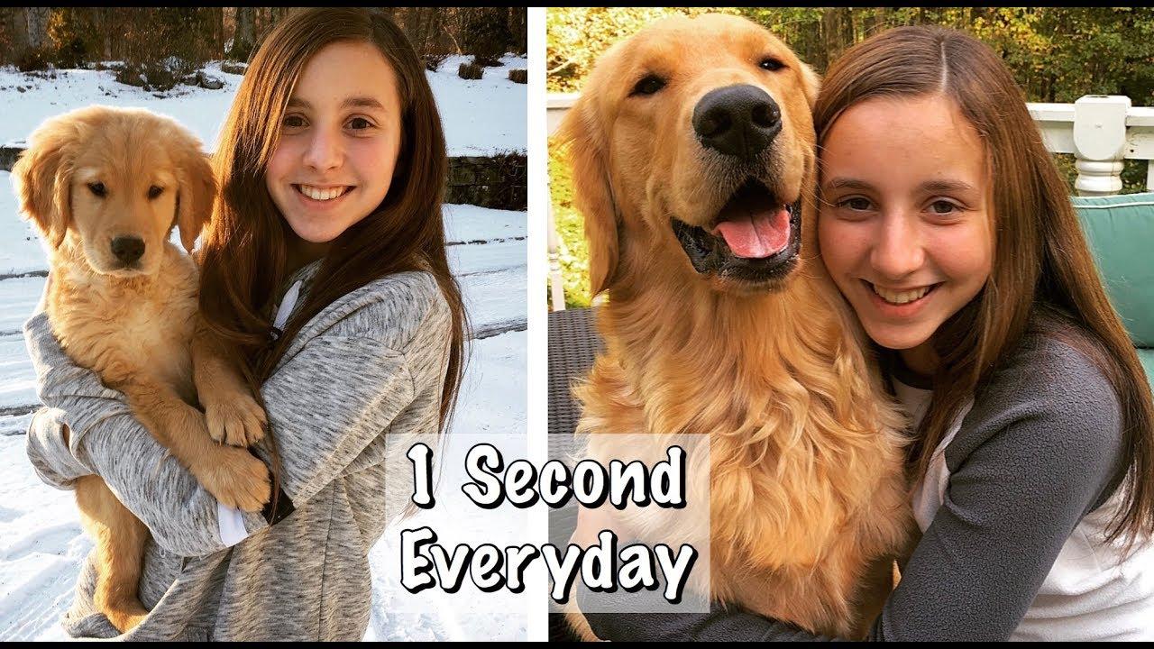 Golden Retriever Puppy 8 Weeks