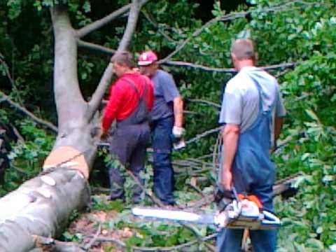 podiranje bukve ludbreg, 5 8 2010, 2 del