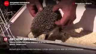 Центр реабилитации вернул в естественную среду диких животных