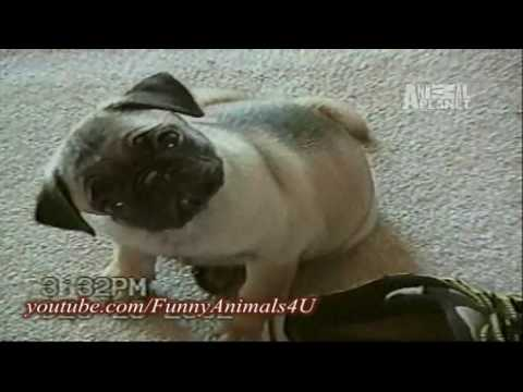 planets funniest animals youtube - photo #42