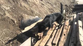 瓦礫訓練施設が新しくなりました。 同じ環境では犬がすぐに慣れてしまい...