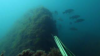 Первые горбылевые висячки. Подводная охота.