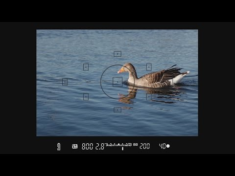 Understanding Your Viewfinder - How to Use Your Camera, Part 9