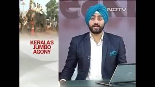 'Gods In Shackles': Elephant Agony Reaches Kerala Assembly - NDTV